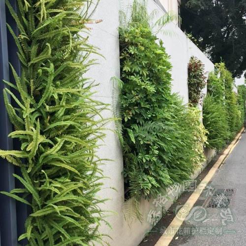小区围墙墙体垂直绿化