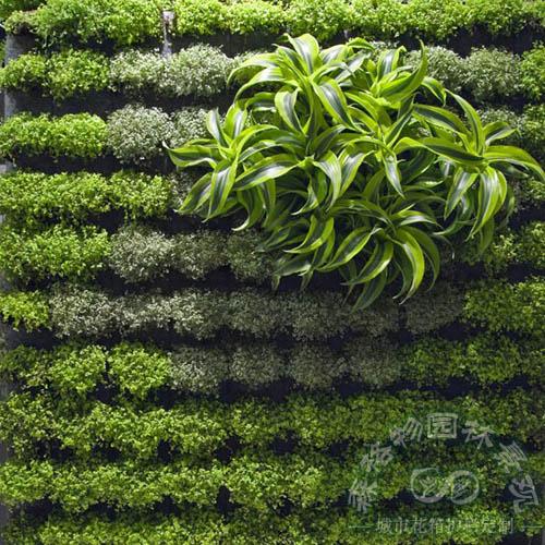 立体绿化,垂直绿化