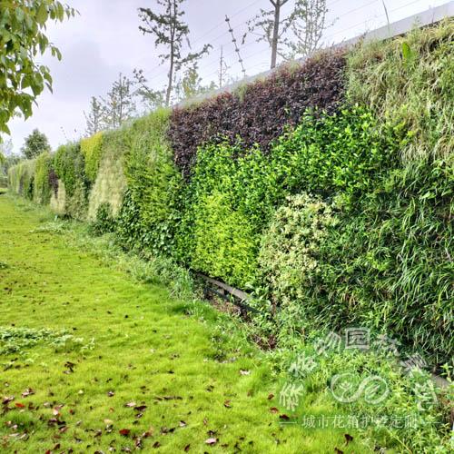 垂直绿化墙,户外景观提升