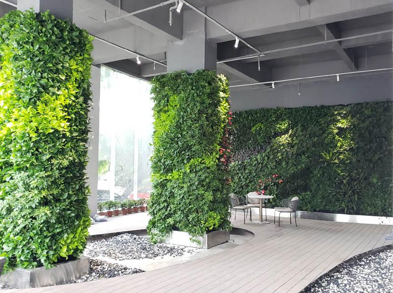 室外垂直绿化一般应该选择哪些植物品类?