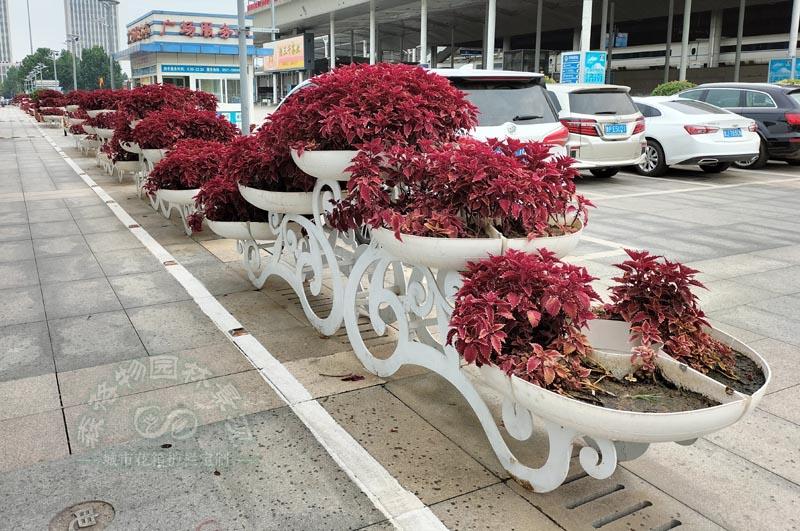 山东济南户外小型花架案例