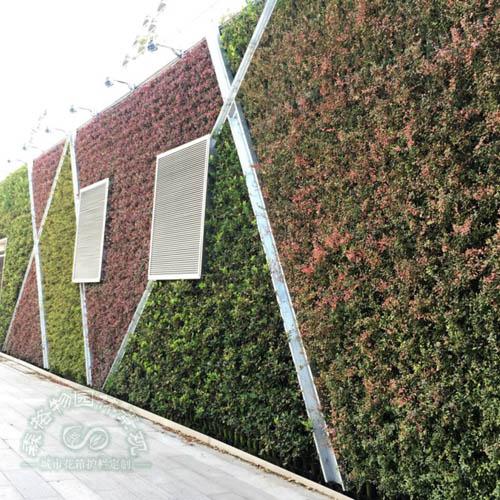 下沉广场垂直绿化墙体