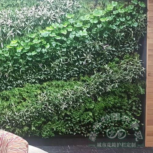 学校图书馆植物墙