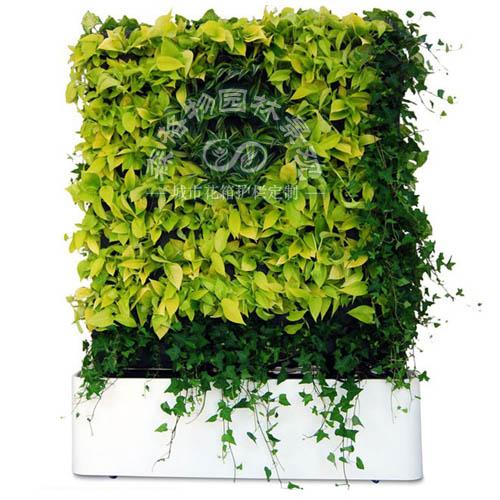 可移动室内垂直绿植墙