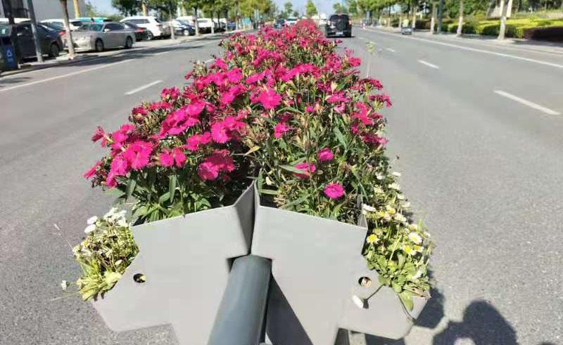 适合花箱的种植植物,栽种哪些植物花箱比较好看?